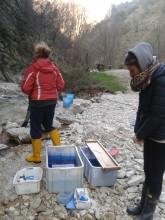 Campionamento delle trote - Rio Vitoschio